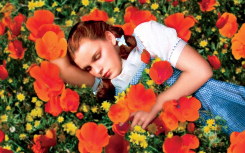 Dorothy in field of Poppies - Wizard of Oz