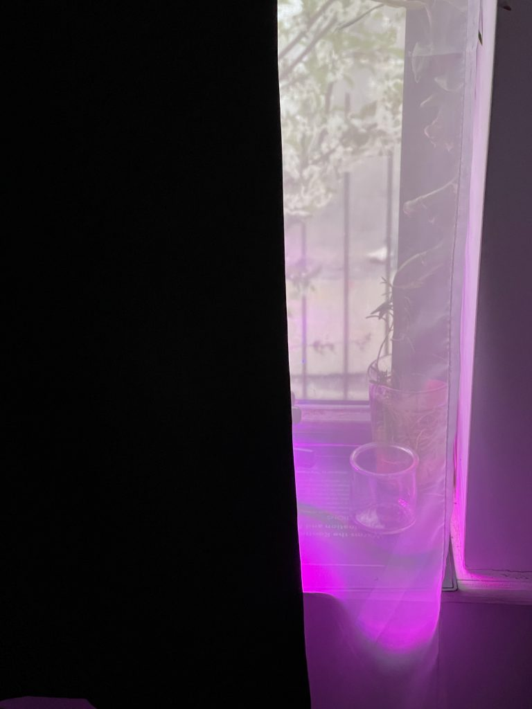 The mystic purple glow of the grow lamps in my window.