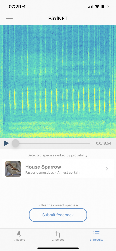 BirdNET identifying a recording of a bird I'd made a couple days before. I could hear the calls, but couldn't see them. I'd soon find out these are definitely house sparrows. I have quite a few of screen shots almost exactly like this!