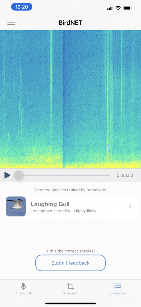 Picture of eBird app identifying a Laughing Gull by Sound.