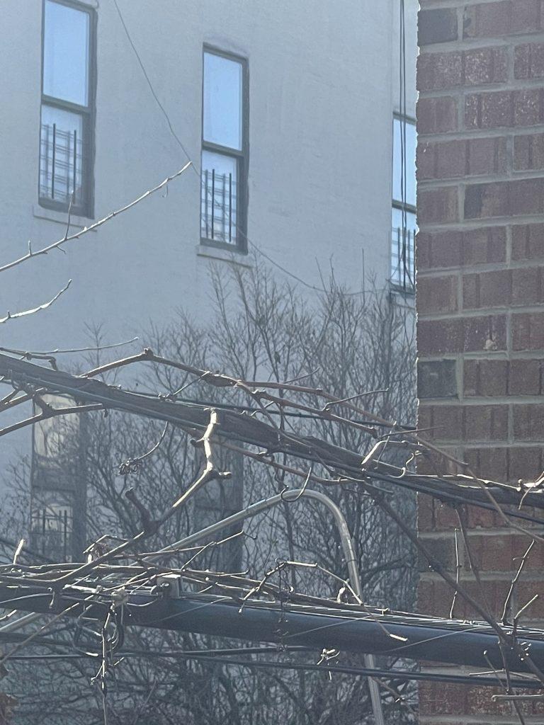 Images of my 'one' bird... s/he's at the top of the branch near the window. Shot 2 of 2
