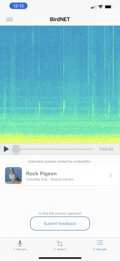 Picture of eBird app identifying a Rock Pigeon by Sound.