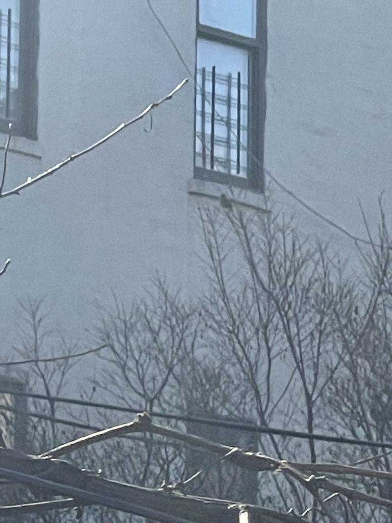 Images of my 'one' bird... s/he's at the top of the branch near the window. Shot 1 of 2