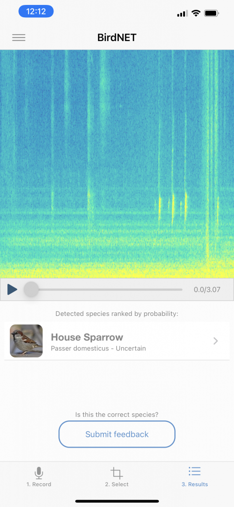 More European Starlings this Week. Picture of eBird app identifying a House Sparrow by Sound.