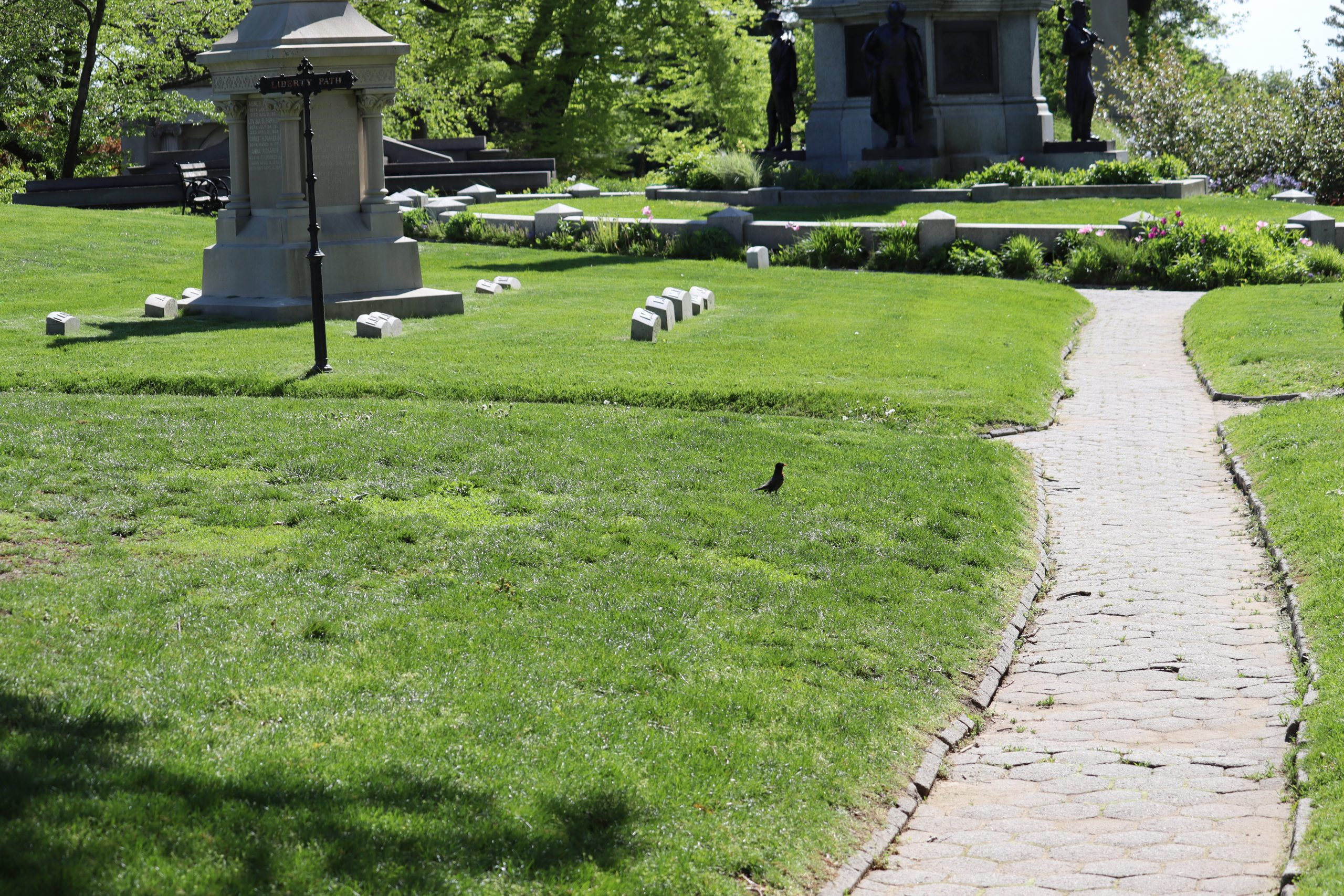 An American Robin in the grass at Green-Wood Cemetery; I used a 55MM lens length for this photo.