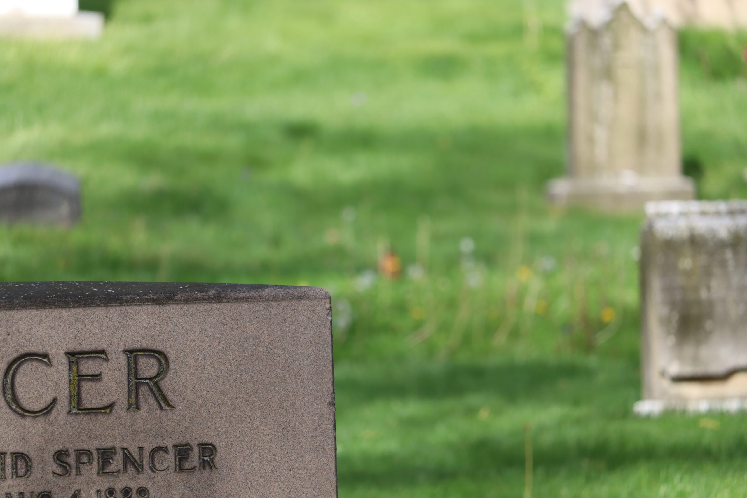 Another example of autofocus ruining the shot. Here the bird is blurry and the tombstone is in focus.