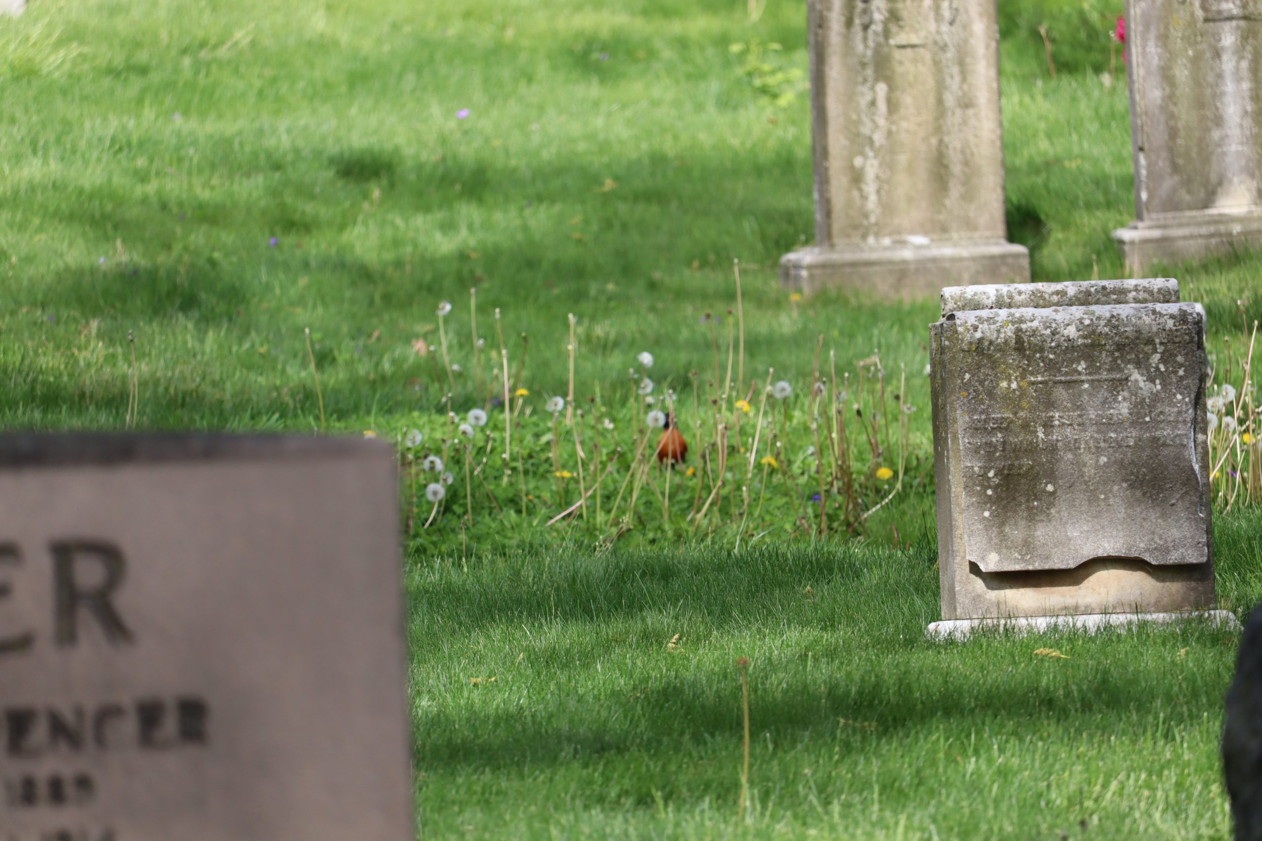 It's not always autofocus ruining the shot. Here the tombstone is in blurry and the bird is in focus.