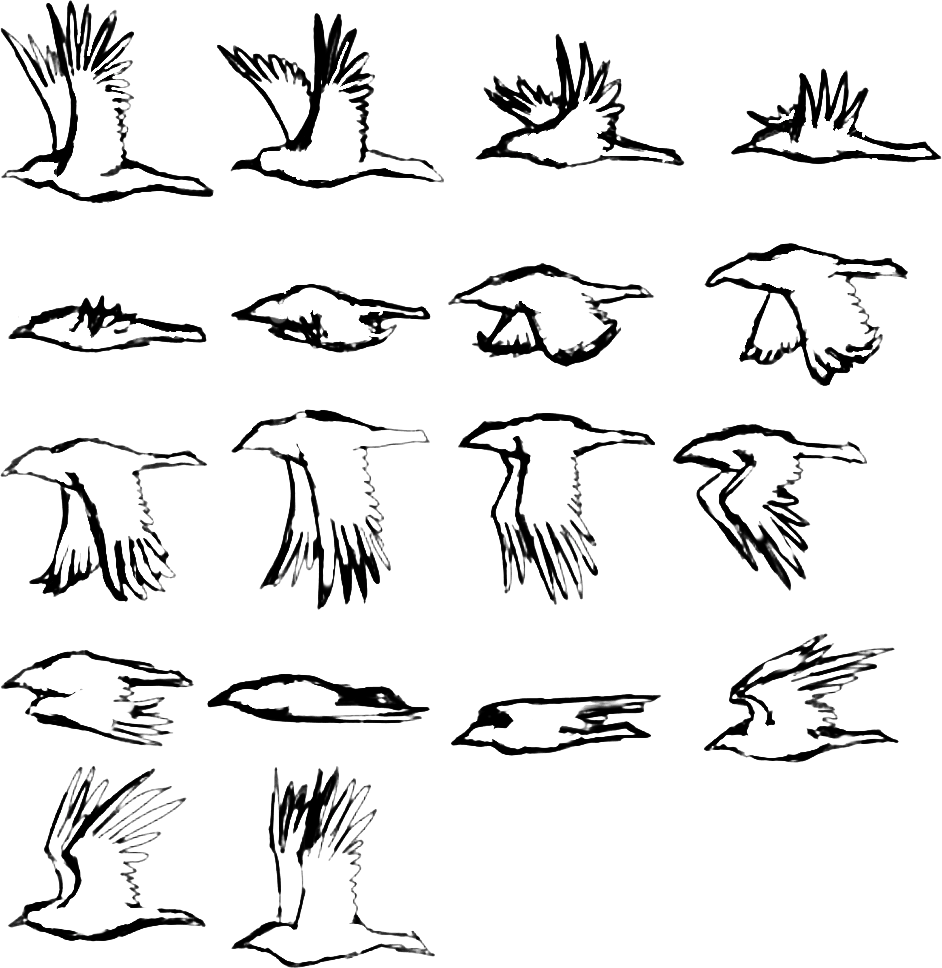 Birds for tracing - Source: Bird Frame Animation Sketch by S. Oldhoff